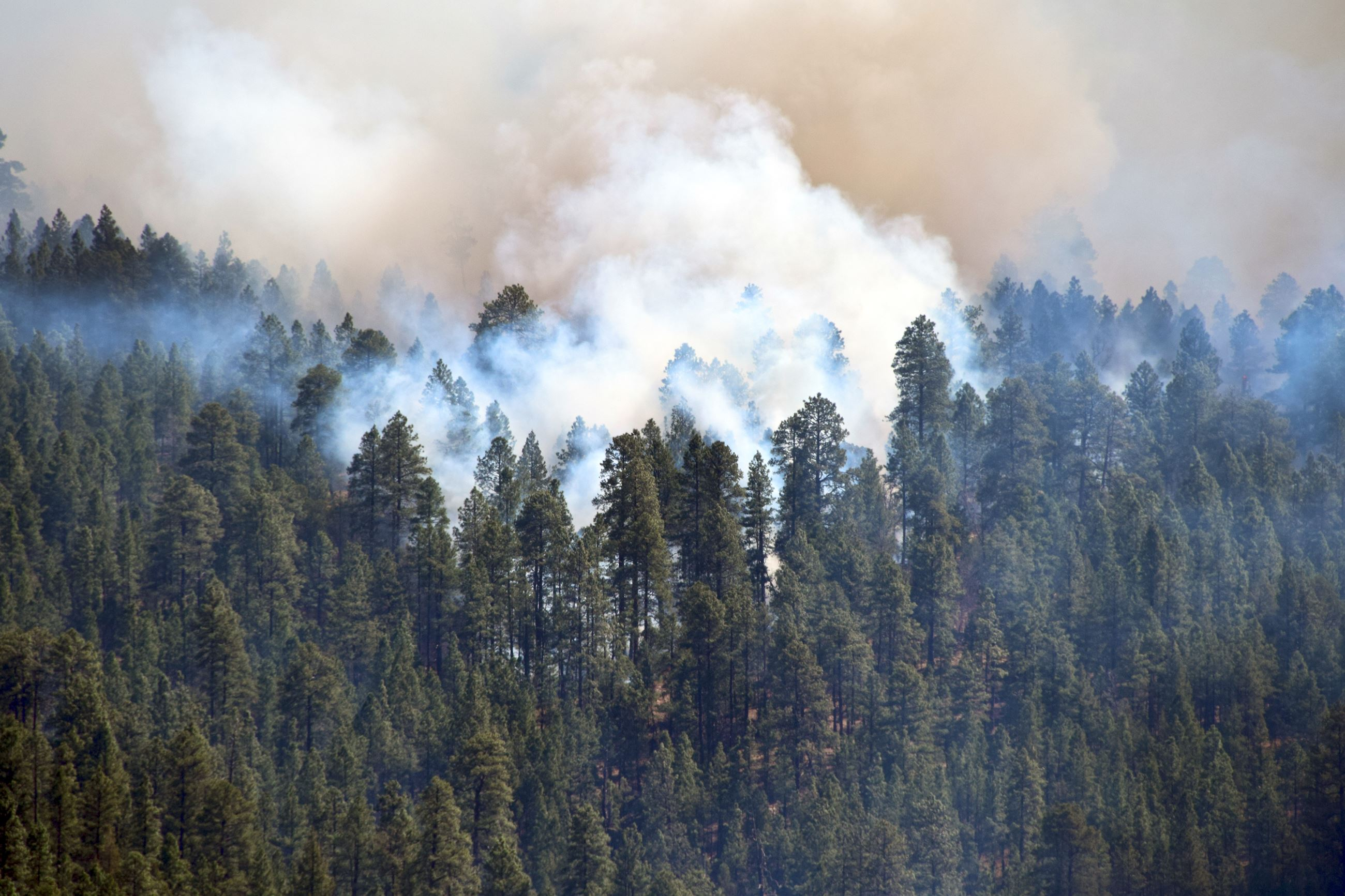 Tinder Fire Coconino NF Public Domain (4)