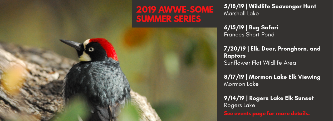 2019 AWWE-Some Summer Series