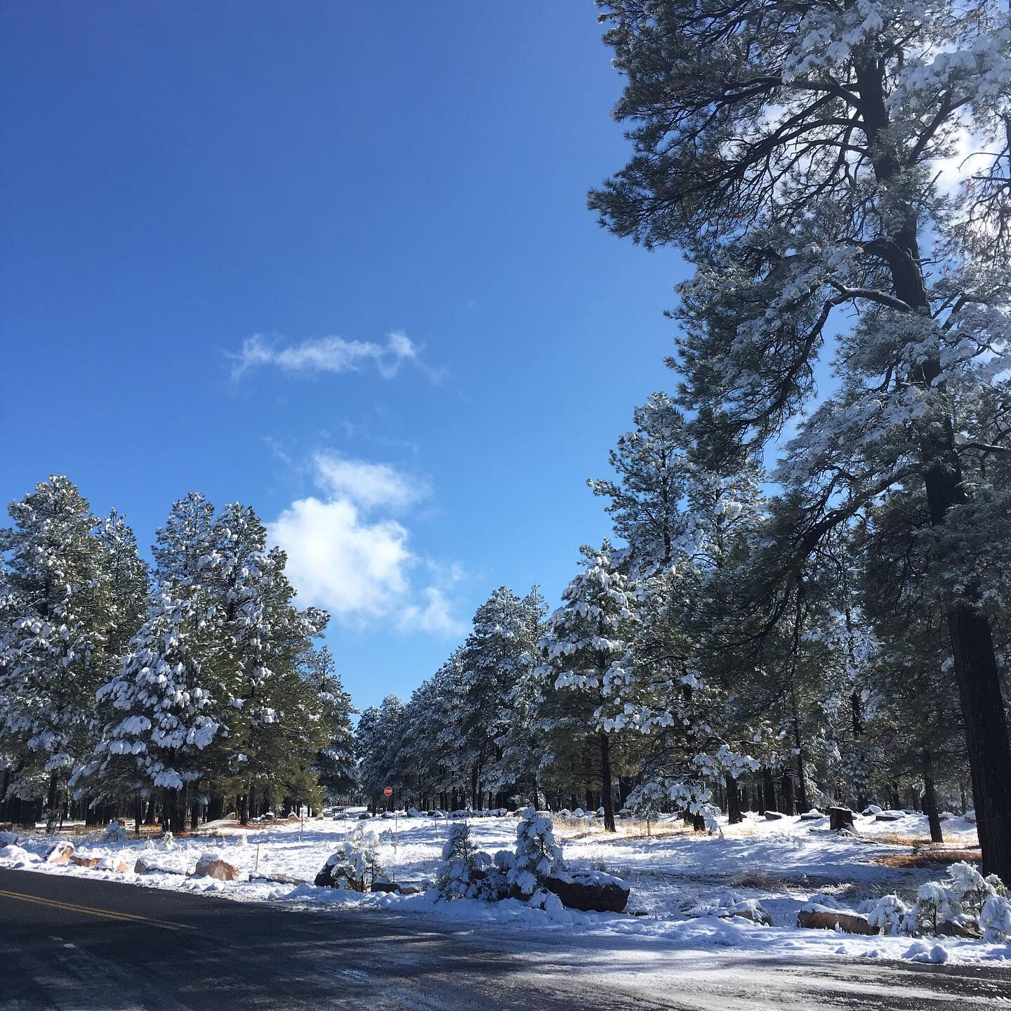 Winter snow at Fort Tuthill County Park