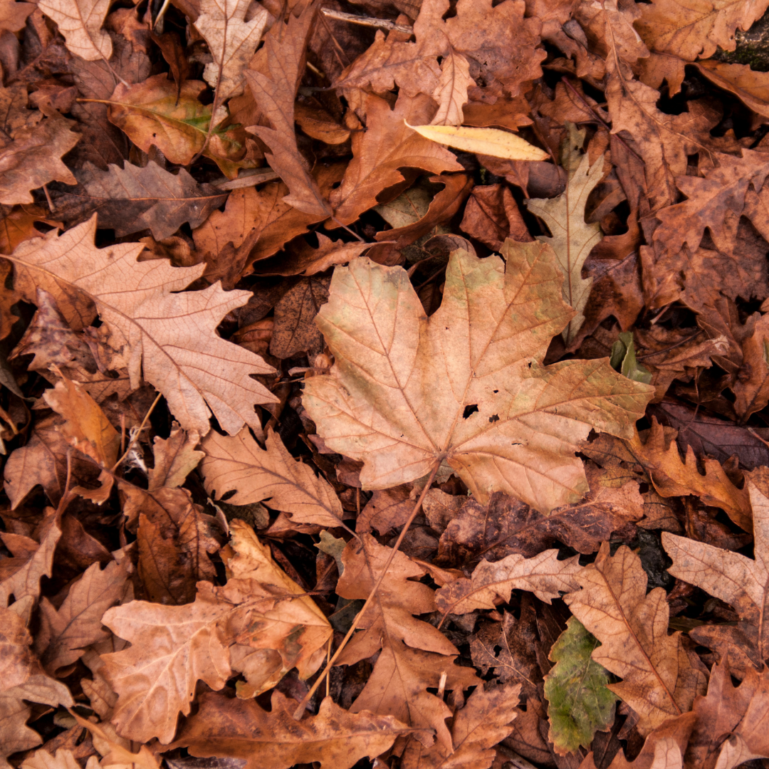 Fall leaves in a pile