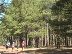 A trail run in progress