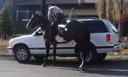 A mounted traffic stop